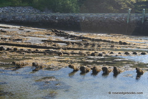 Figure #86.  Very low tide; maybe no longer bush-blocked.